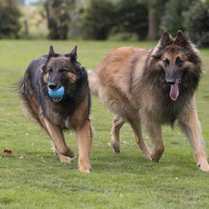 Faites jouer votre chien avec une balle ou un frisbee