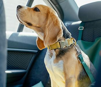 Prendre soin de son chien en voiture