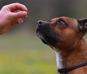 Définissez des règles élémentaires pour éduquer votre chien