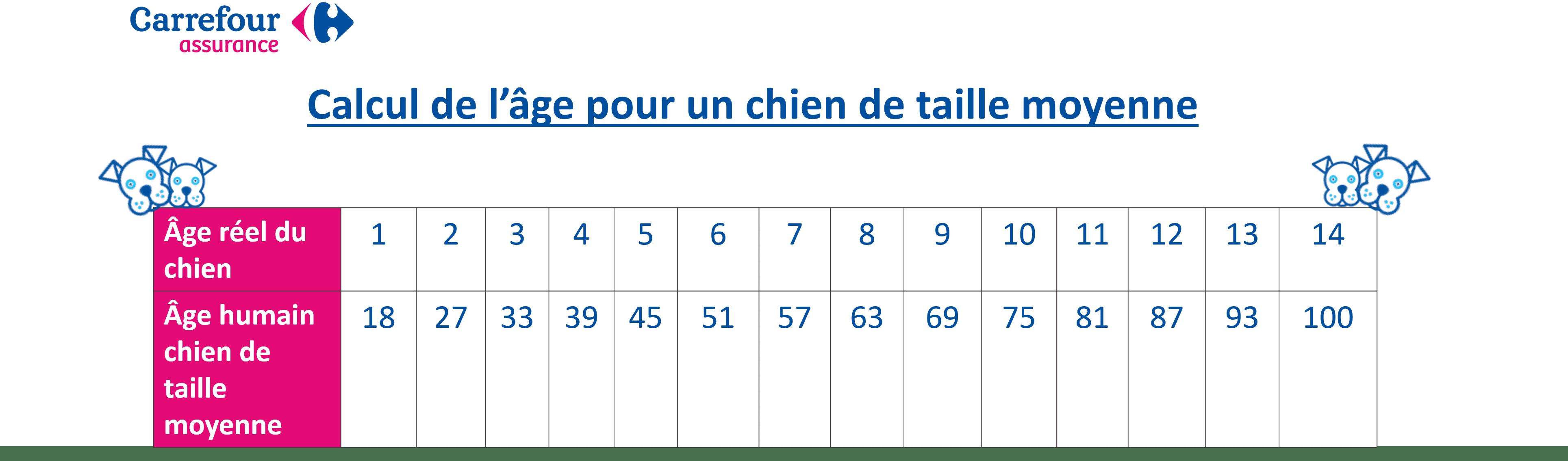 Calcul âge chien de taille moyenne