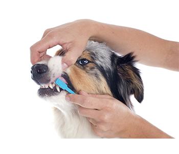 chien brosse à dents