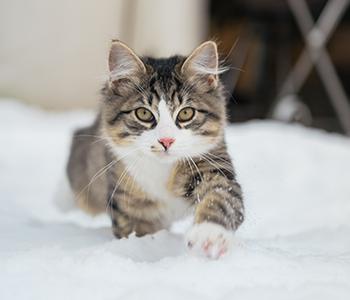 Protégez votre chat face aux dangers du froid