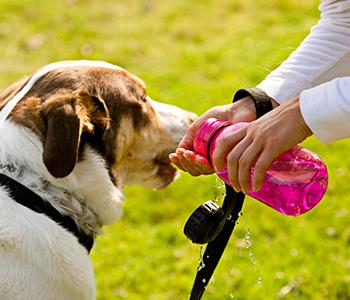 Emportez une bouteille pour hydrater votre chien