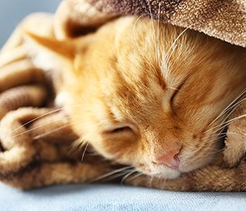 Laissez rentrer votre chat au chaud
