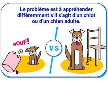 différence chien chiot
