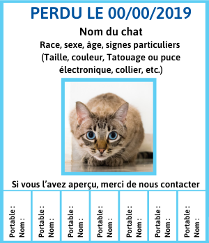 annonce chat perdu