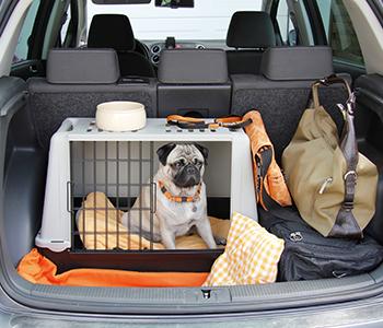 Équipement pour chien en voiture