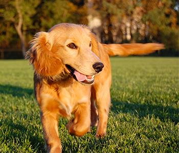 Sport chien