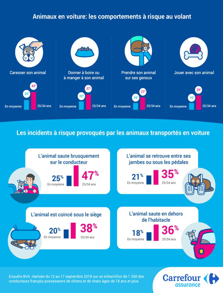 Infographie du comportement à risque au volant pour votre animal de compagnie