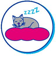 Picto chaton dort