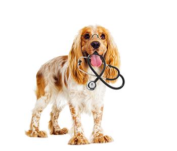 Comment fonctionne une assurance santé pour chien ?