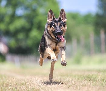 collier pour chien hyperactif