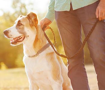 Gardez votre chien près de vous