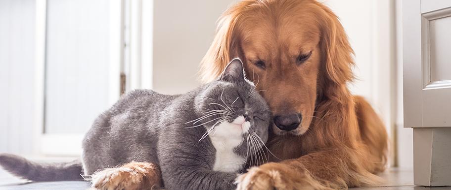Comment faire cohabiter un chien et un chat : nos conseils