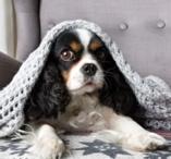 Les astuces pour proteger son chien du froid