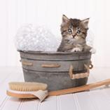 chat dans une bassine pour toilettage
