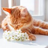 chat sent des fleurs