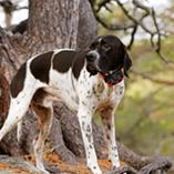 collier connecté chien