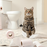 chat toilettes