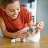 Comment débarrasser mon chat des puces ?