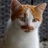 Moustaches de chat