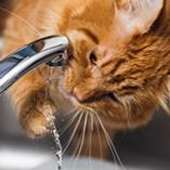Les astuces pour protéger son chat de la chaleur