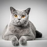 Stériliser son chat : les avantages et inconvénients