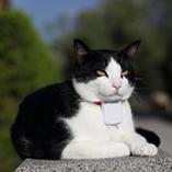 collier connecté chat