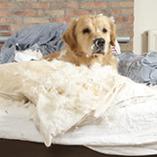 chien dans un lit