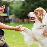Friandise et chien
