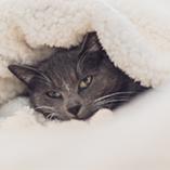 Chat endormi sous une couette