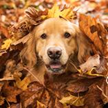 Faites attention aux dangers de l'automne pour votre chien
